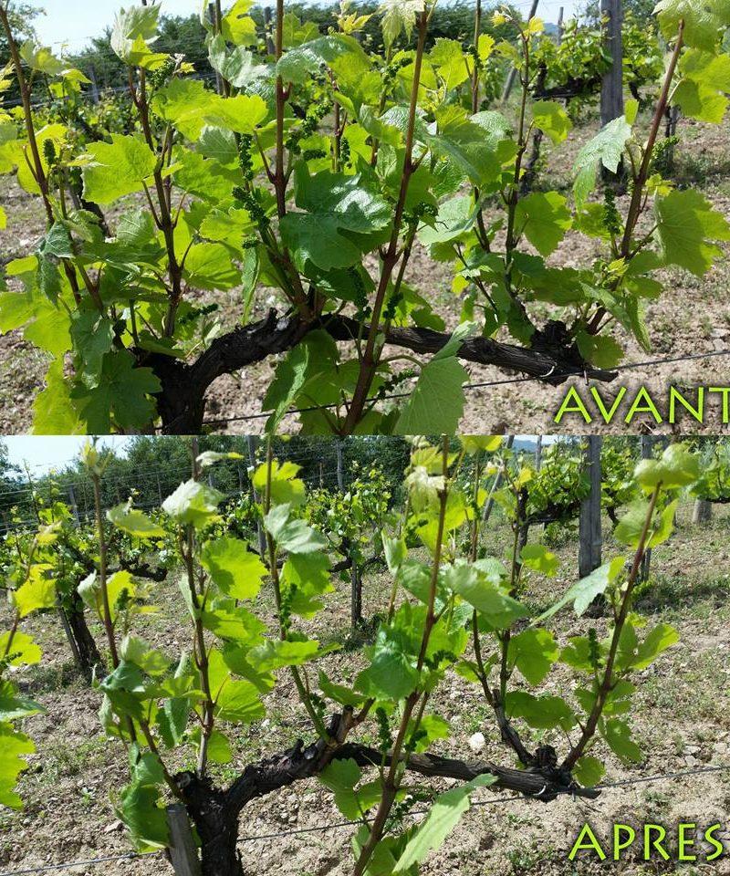 domaine Déplaude naturedevin.com vin bio