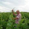 Domaine Pignard naturedevin.com vin bio