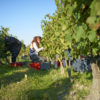 Vignoble Domaine Breton naturedevin.com vin bio