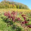 Les vignes domaine Chatillon Jura naturedevin.com vin bio