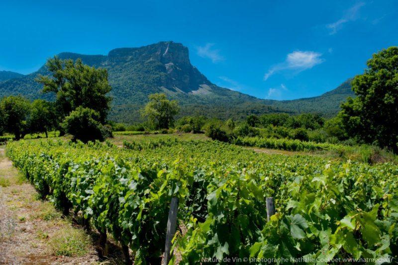 Sous le Granier en Savoie Les vignes naturedevin.com vin bio