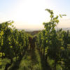 beckhartweg naturedevin.com vin bio