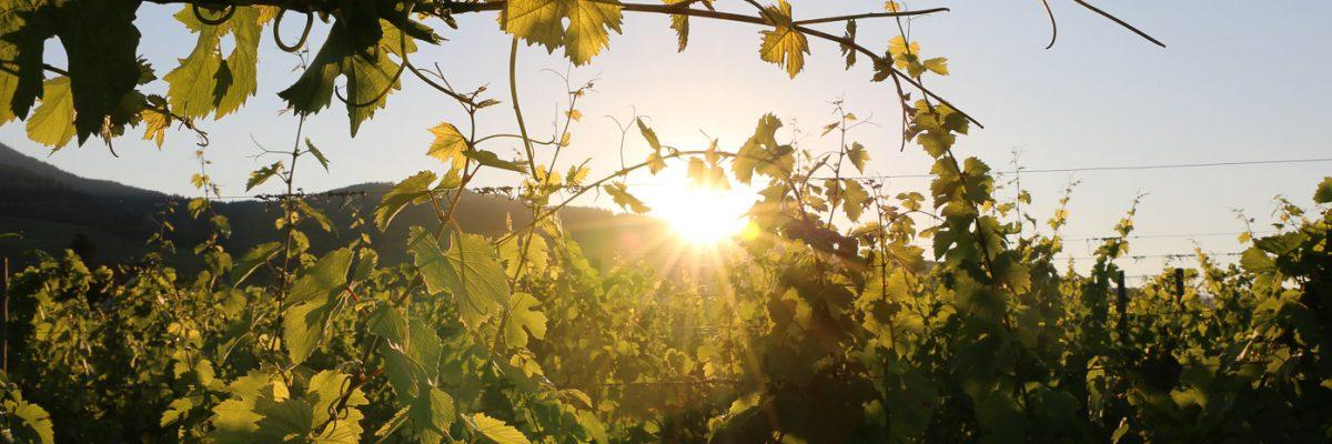 domaine beckhartweg naturedevin.com vin bio