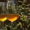 Sauternes Rousset-Peyraguet naturedevin.com vin bio