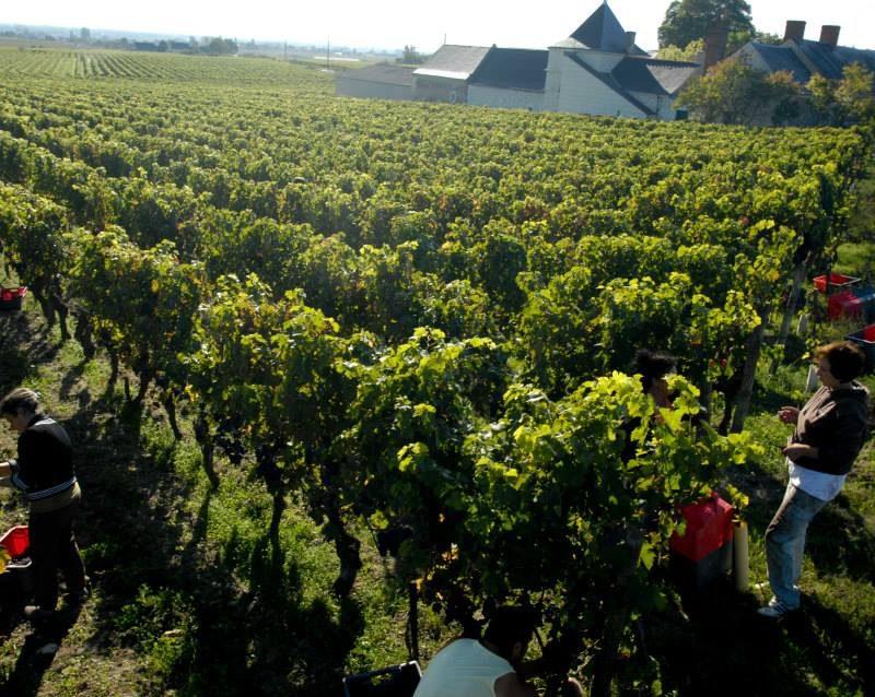 Domaine de la Chevalerie les vignes naturedevin.com vin bio