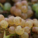 vignoble d'Alsace vin bio naturedevin.com