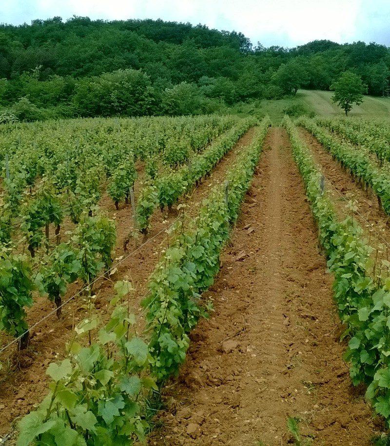 Domaine des Gandines naturedevin.com