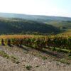 Champagne Barbichon naturedevin.com