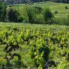 Les vignes, Domaine de la Guicharde naturedevin.com